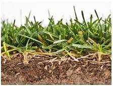 thatch grass dethatch